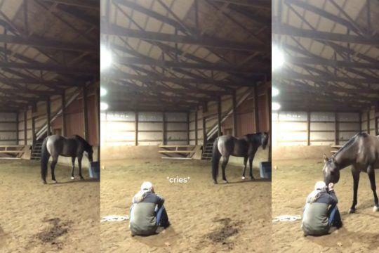 video viral: ¡mira como reacciono este caballo al ver llorar a su duena!