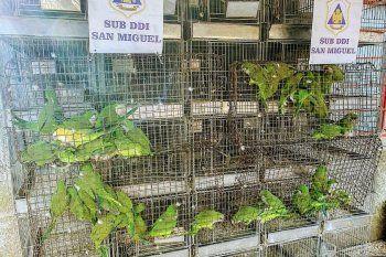 Las aves exóticas se rescataron en Merlo