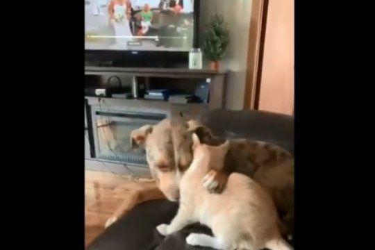 todo venia bien hasta que..: el video viral mas tierno entre un perro y un gato con un final inesperado