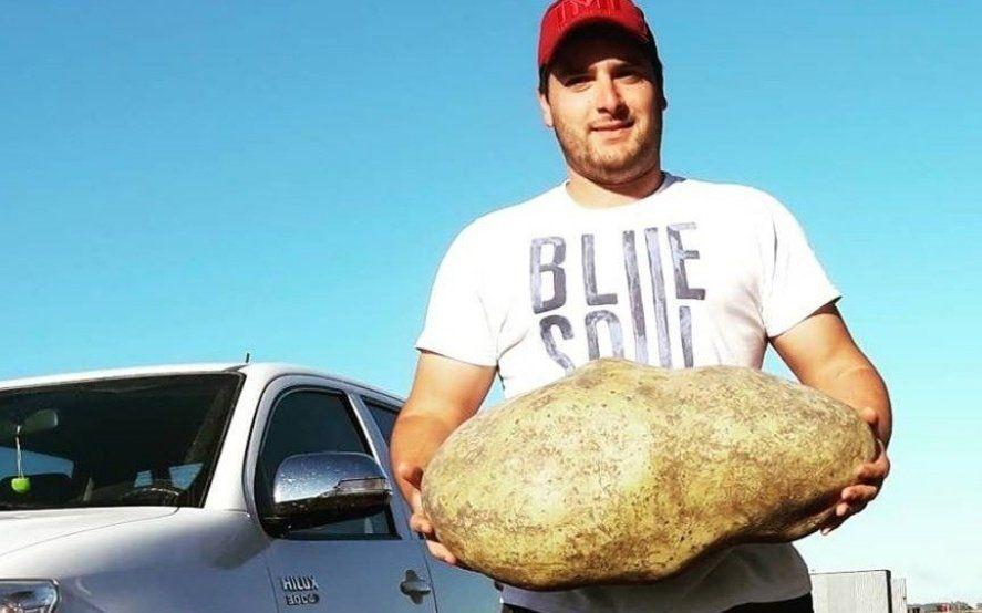 Sorpresa en Benito Juárez: productores encuentran una papa gigante de casi 4 kilos