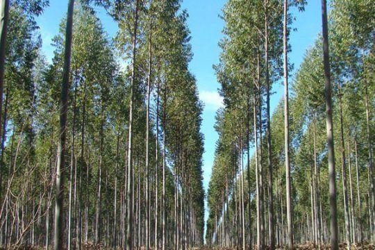 La Provincia impulsa el desarrollo forestal