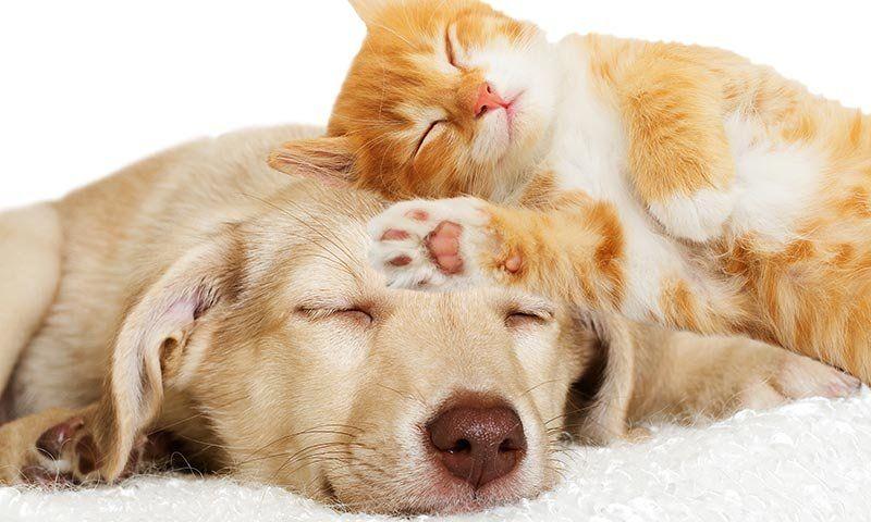 Carnet para mascotas en La Plata: avanza el proyecto