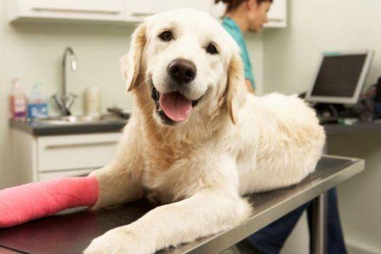 el senasa prohibio el uso y la venta de una serie de productos veterinarios en todo el pais