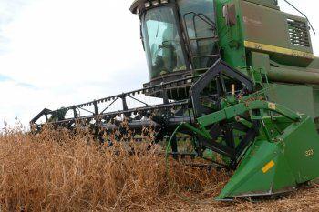 El campo agita pronósticos negativos sobre la próxima campaña de trigo y maíz pese a los datos favorables del mercado