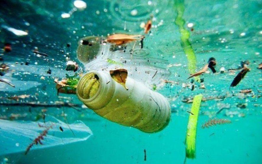 Alerta: cada semana consumimos cinco gramos de plástico, el equivalente a una tarjeta de crédito al año