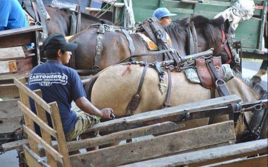 Mussi quiere sacarles los caballos a los cartoneros y reemplazarlos con bicicletas