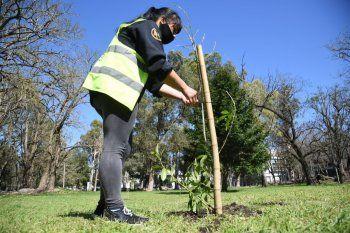Se plantaron 150 árboles en el Paseo del Bosque de La Plata
