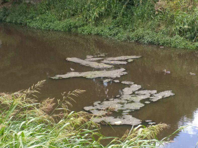 Los vecinos del arroyo Rodríguez viven afectados por el olor nauseabundo producto de vuelcos ilegales