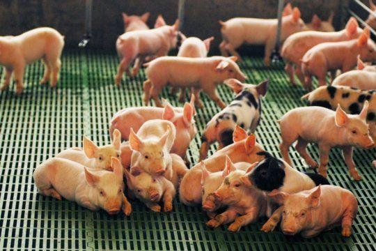 con una inversion de 4 millones de pesos, agroindustria impulsara la produccion de cerdos en el sudoeste bonaerense