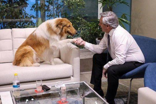 biografia de un collie ?nacional y popular?: dylan fernandez, el perro presidencial que es furor en las redes