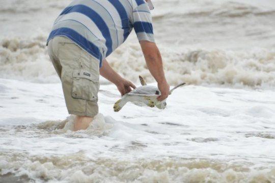 video: asi volvia al mar una tortuga despues de expulsar mas de un metro de plastico
