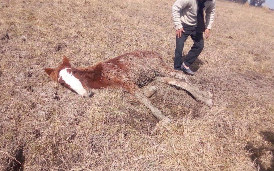 Encuentran más de 600 caballos robados en un campo de Ezeiza: algunos estaban muertos y otros agonizando