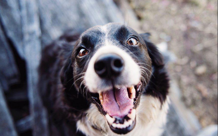 ¿Qué hago con el perro en vacaciones? Enterate cómo funcionan y cuánto salen las guarderías caninas