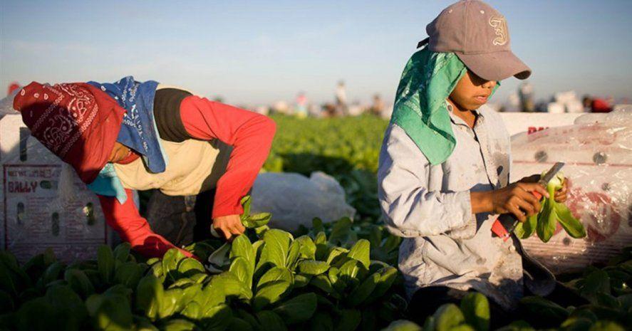 El Gobierno presenta un programa con el fin de erradicar el trabajo infantil