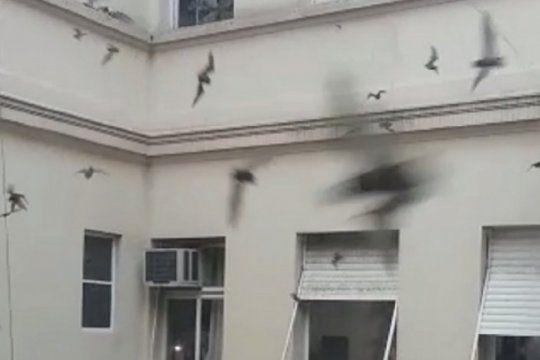 video: en general madariaga, el edificio municipal fue invadido por murcielagos