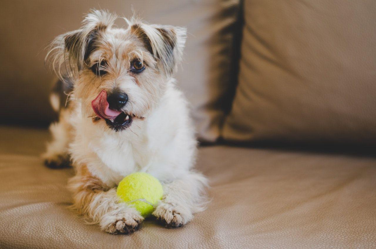 El Municipio oficiará como intermediario entre adoptantes y quienes den animales en adopción