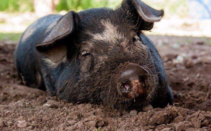 Veganos por la liberación animal: conocé por dentro el primer santuario de La Plata