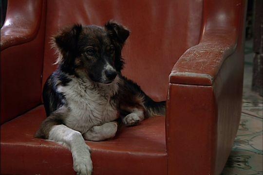 okupas: ¿cual es la historia de severino, el perro que participa en la serie?