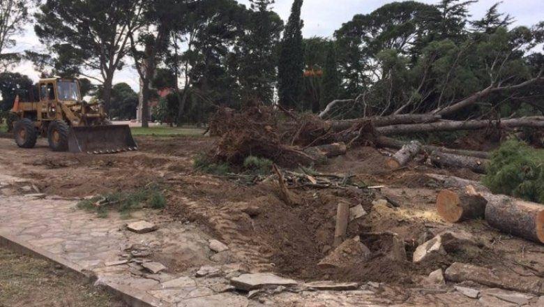 Triste: así eliminaban más de 100 árboles históricos de la plaza Ernesto Tornquist
