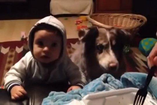 video viral: queria que su bebe diga ?mama?, pero su perro lo hizo primero