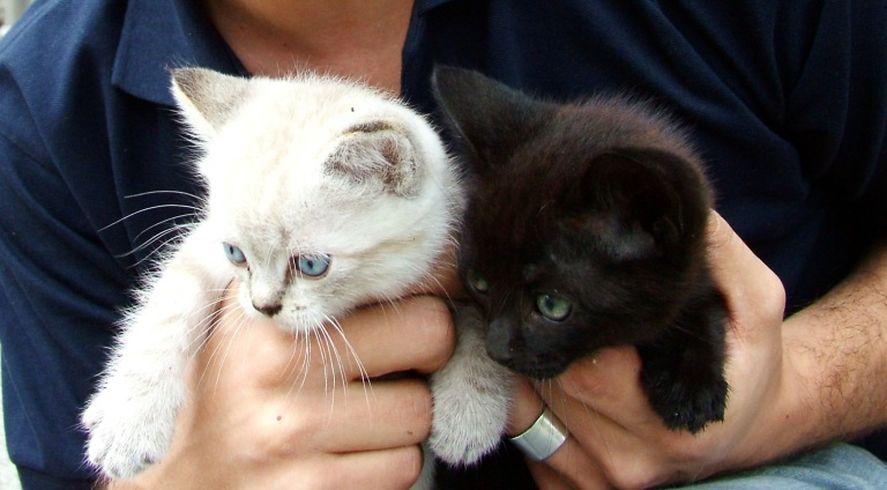 Octubre: ¿por qué no hay que regalar gatos blancos o negros?
