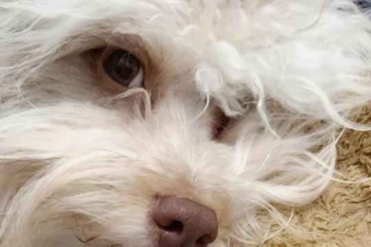 nori: el perro que mas se parece a un humano y es furor en las redes