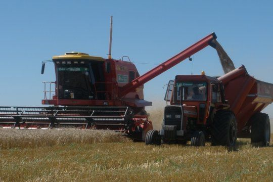 el trigo se debate entre un area de siembra record y las dudas por la intervencion estatal