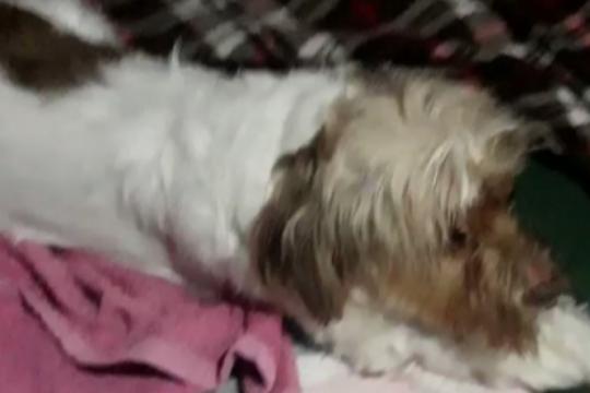 el increible video de un perrito sufriendo un ataque de epilepsia por la pirotecnia en navidad