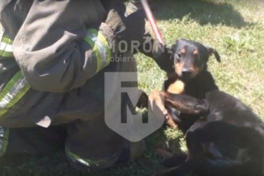 emotivo rescate en moron: bomberos le salvaron la vida a un perro atrapado en una alcantarilla