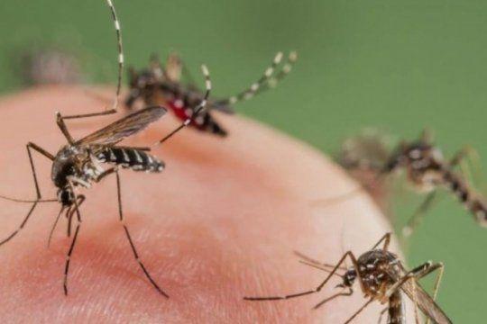 pican, pican los mosquitos: con la lluvia y el calor se reproduce en la region el insecto mas molesto