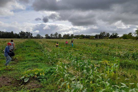 Vecinos recolectan las verduras en lo que fue la toma de tierras de Los Hornos