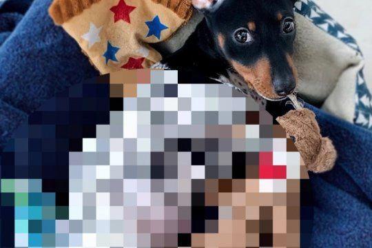 furor por ?moo?: el mini perro que enternece por su extrano color