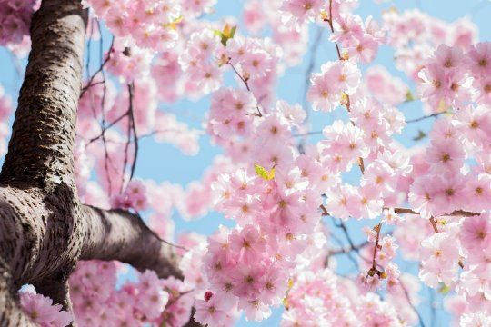 Arrancó la primavera: ¿cómo estará el clima?