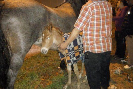 sin comida y rodeados de excremento: piden ayuda para salvar a 20 animales encontrados en un camion abandonado