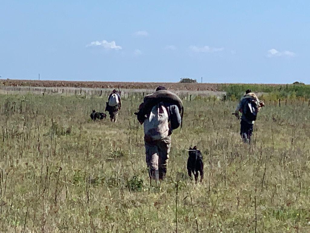 chascomus: denuncian caza furtiva y carreras de galgos en la zona rural
