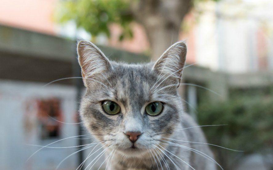 Mascotas en cuarentena: Cómo actuar ante el estres y la ansiedad de nuestros gatos