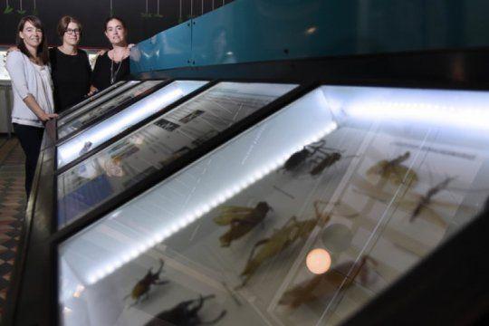 la unlp presento ?biodar?, el primer portal web sobre insectos de la argentina