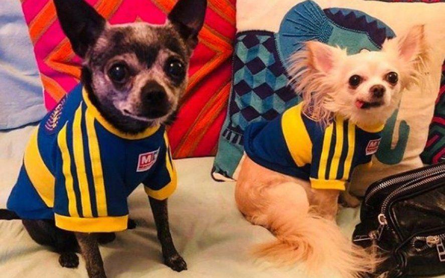 La bronca de Marcelo Tinelli con Lisandro López por vestir a los perros de su hija con la camiseta de Boca