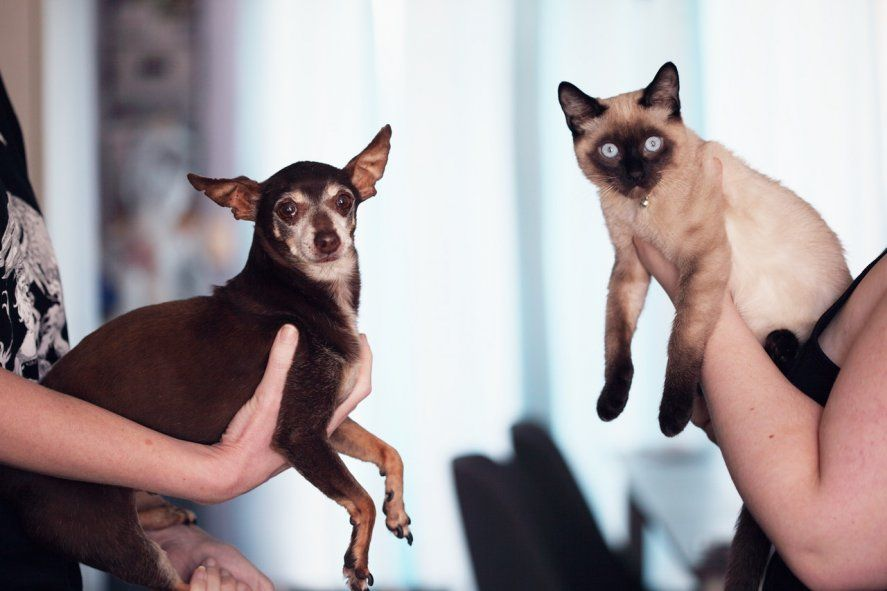 En Argentina, perros y gatos son los mayores transmisores de rabia (Foto de Sharon McCutcheon en Pexels)