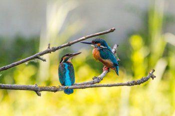 El informe Planeta Vivo es elaborado cada dos años por WWF