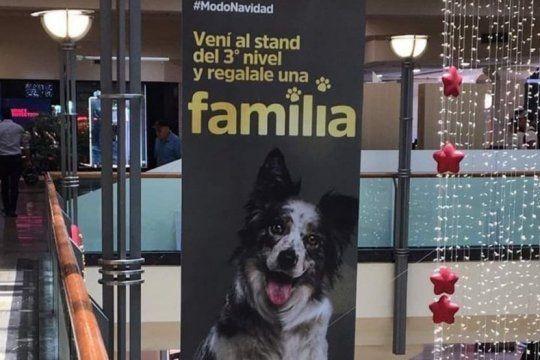 ?regalale una familia?, la campana para adoptar perros en navidad que conmueve a todos en las redes