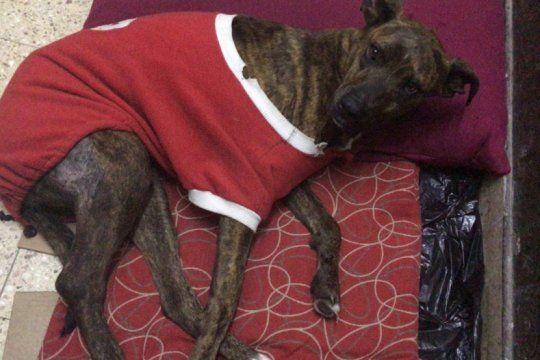 la plata: un joven baleo a un perro de la calle, le allanaron la casa y lo detuvieron