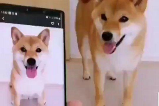 El video viral del perro que asombra a sus dueños imitándose a si mismo