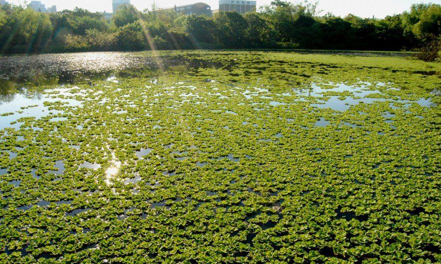 Día Mundial del Medio Ambiente: 5 parques y reservas naturales bonaerenses que tenés que conocer