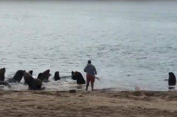 Imágenes del momento en el que uno de los pescadores amedrenta a los lobos marinos.
