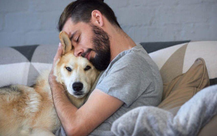 Terapia con mascotas: Para aliviar el estrés, recomiendan acariciar perros y gatos