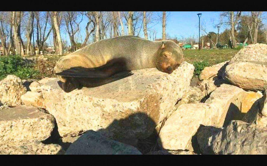 Imágen de: www.fuertebarragan.com