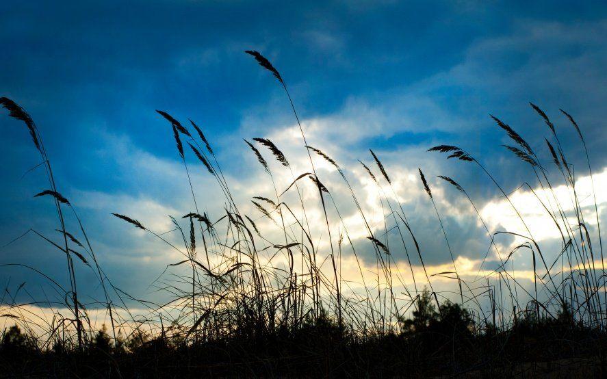 Alerta meteorológico por vientos fuertes: qué precauciones tomar para evitar accidentes