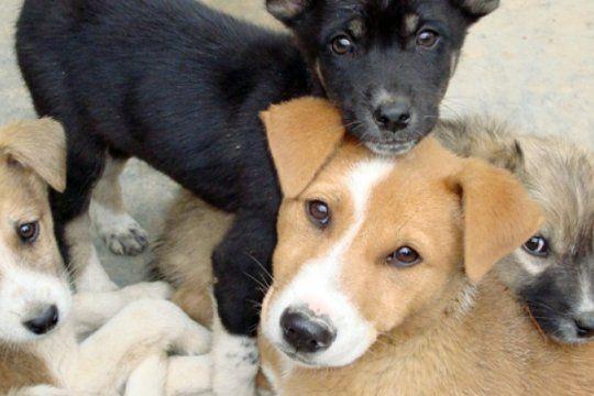 mas de 1.200 mascotas fueron vacunadas contra la rabia durante la semana del animal