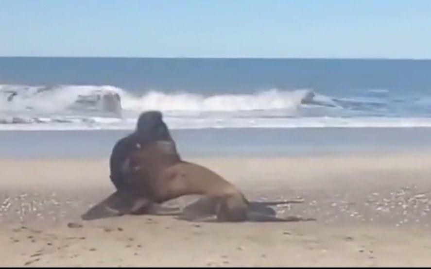 En medio de la cuarentena, en Mar Azul recibieron la cálida visita de un lobo marino